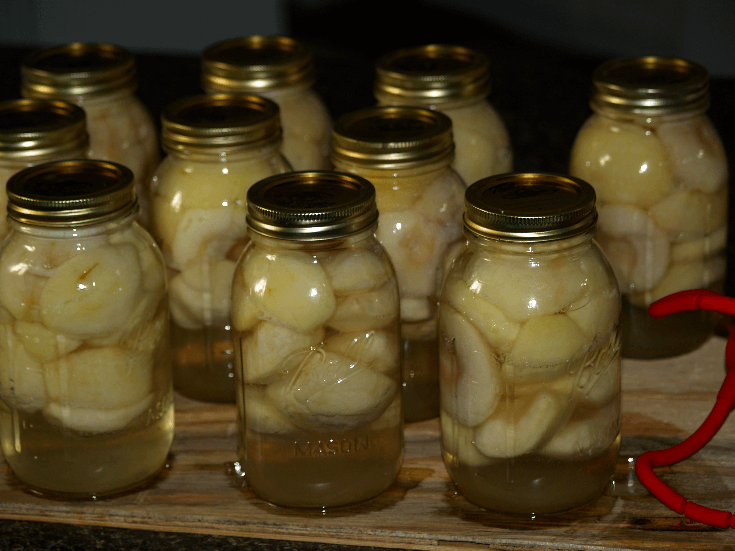 Canned Apples