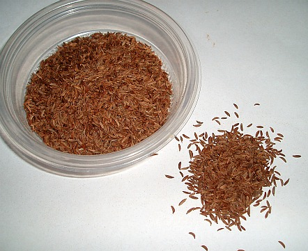 What is Caraway?