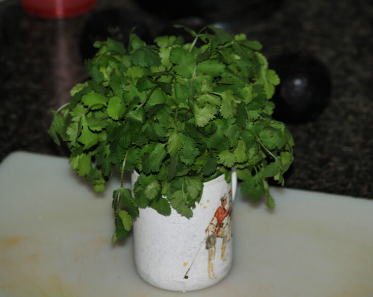 Cooking with Cilantro
