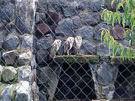 ecuador bird sanctuary
