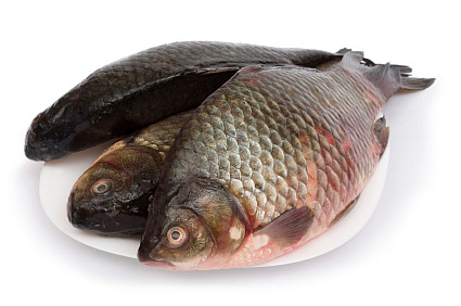 How to cook carp for Can you eat carp fish