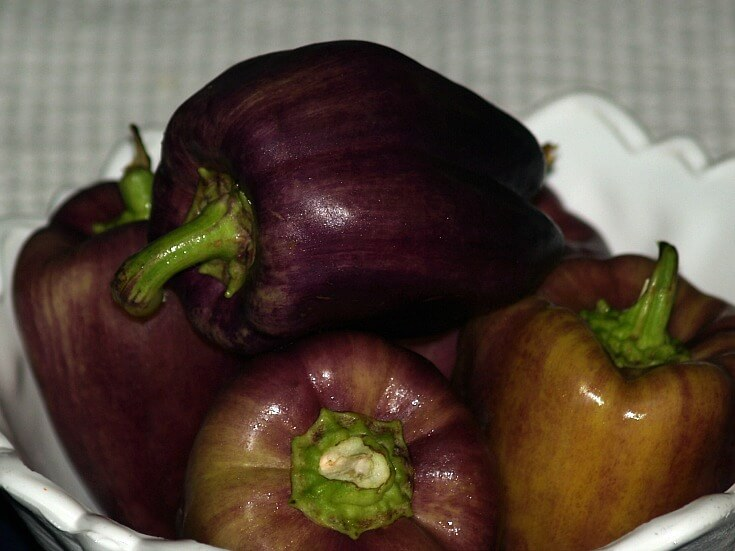 Purple Sweet Peppers