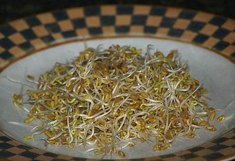 Fenugreek Sprouts
