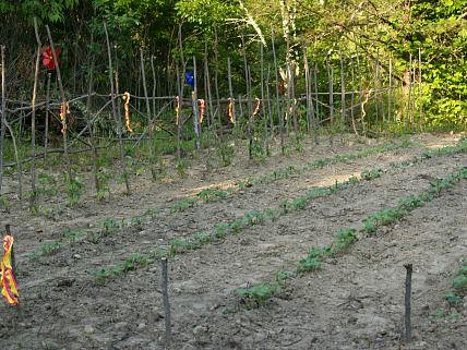 My Neighbors Garden Starting to Grow