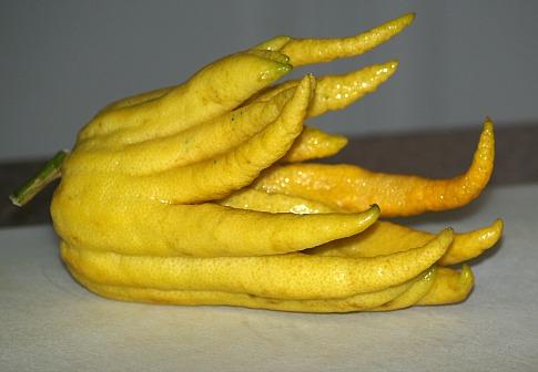 Citron or Buddha's Hand