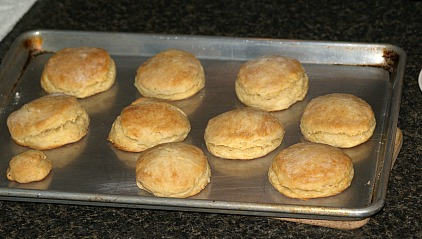 Fresh Baked Country Yeast Biscuits